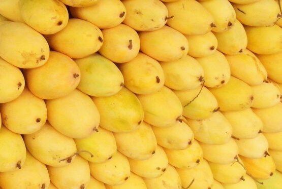 Filipino mango